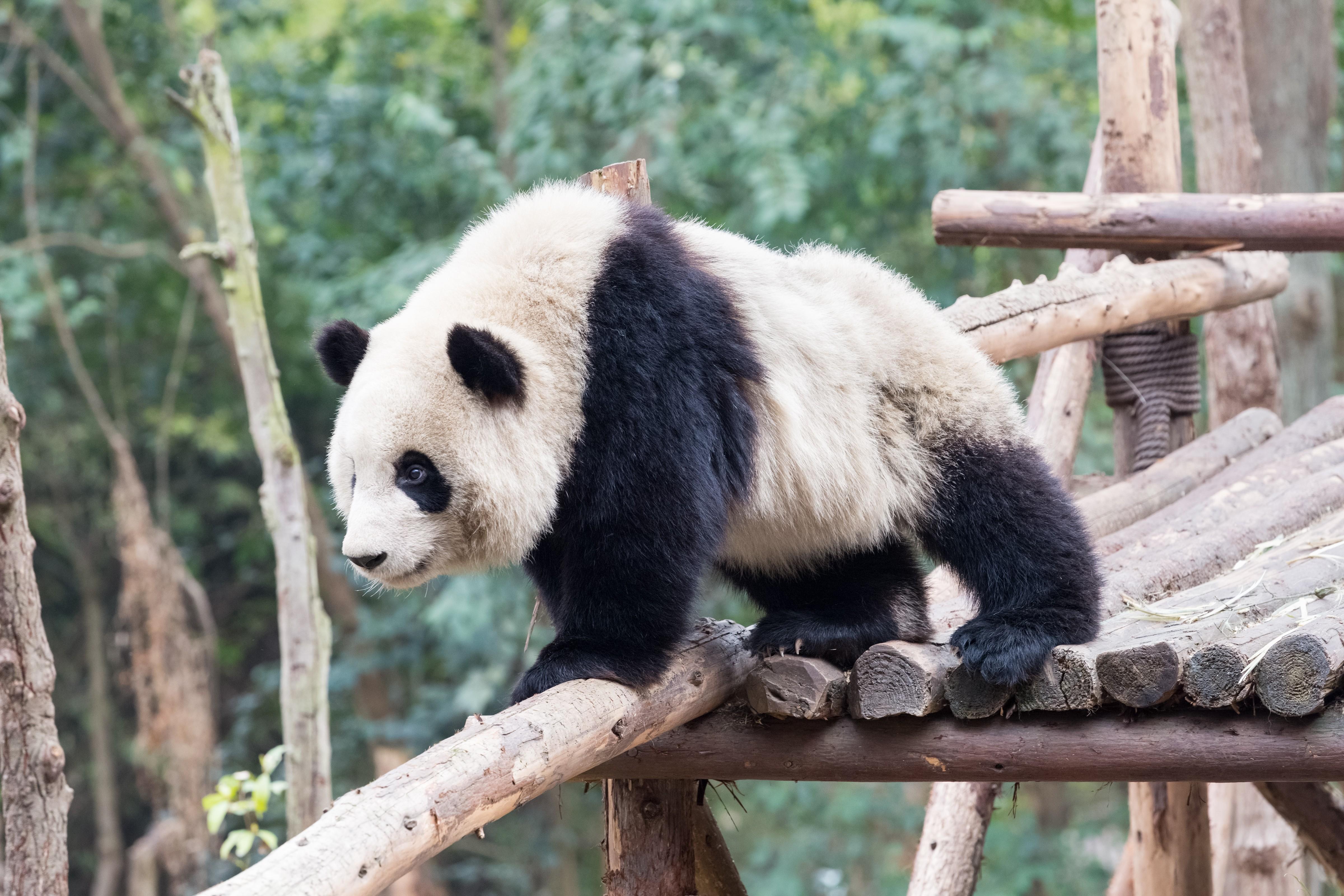 Découvrez la nouvelle application du Zoo de Beauval…