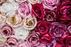 Des fleurs pour la Saint-Valentin!
