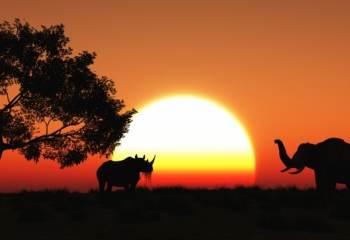 Assiste-t-on à une sixième extinction d'espèces animales ?