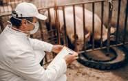 Une grippe porcine qui inquiète ?