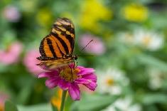 La technologie mobile affecterait les insectes