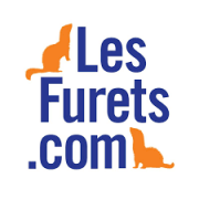 Lesfurets.com et son site